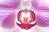 Orchid Five