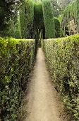 Maze In The Gardens Of The Royal Alcazar In Seville, Spain