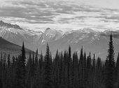 Landscape With Forest In British Columbia. Mount Revelstoke. Canada