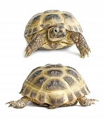Tortoise Face And Back | Isolated