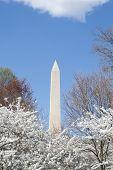 image of obelisk  - The Washington Memorial was built to commemorate George Washington  - JPG