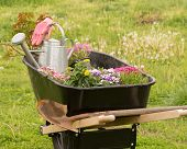 pic of wheelbarrow  - Wheelbarrow loaded with plants - JPG