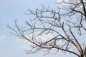 picture of drought  - Drought in Thailand the tree is shed leaves  - JPG