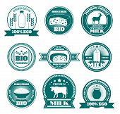 foto of dairy cattle  - Eco friendly dairy farm emblems set with organic cottage cheese and fresh milk abstract isolated vector illustration - JPG