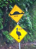 Cassowary Sign - Queensland, Australia