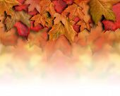 Red Orange Fall Leaves Background Border
