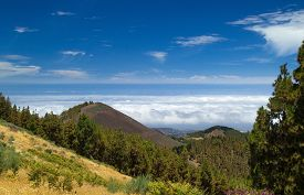 picture of mountain-ash  - Gran Canaria route Cruz de Tejeda  - JPG