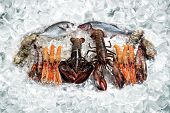 picture of crawdads  - some seafood on ice cubes  - JPG
