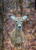 Постер, плакат: Wild Deer In The Wilderness
