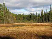 Beautiful autumn woodland scene