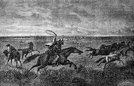 pic of pampa  - The Gauchos of the Pampas - JPG