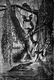 pic of gator  - The spider monkeys - JPG