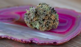 picture of agate  - Close up macro of the Indica Strain Grandaddy Purple medicinal medical marijuana on a pink and white agate stone - JPG