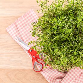 image of clary  - Alternative mediterranean medicinal plants lemon thyme for medicinal and culinary use on wooden background - JPG