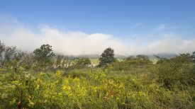 pic of goldenrod  - Early Fall Meadow with Goldenrod - JPG
