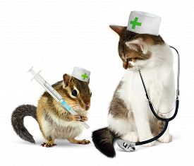 picture of chipmunks  - Veterinary concept funny chipmunk and cat with phonendoscope and syringe on white - JPG