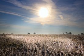 stock photo of novosibirsk  - The grass is covered with frost autumn morning - JPG