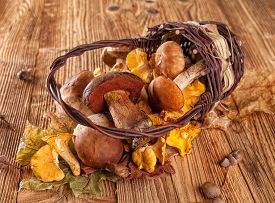 picture of chanterelle mushroom  - Mushroom Boletus and chanterelle on wooden table - JPG