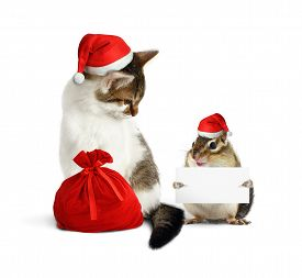 pic of chipmunks  - Funny xmas pets chipmunk with blank and cat with santa hat and sack - JPG