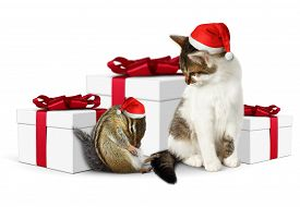 picture of laughable  - Comic xmas pet funny squirrel and cat dressed santa hat - JPG