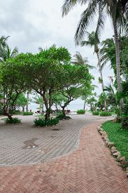 foto of garden eden  - A tropical garden with palm trees overlooking the sea with blue sky - JPG