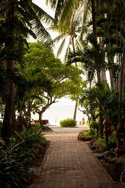stock photo of garden eden  - A tropical garden with palm trees overlooking the sea with blue sky - JPG