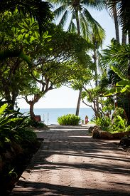 image of garden eden  - A tropical garden with palm trees overlooking the sea with blue sky - JPG