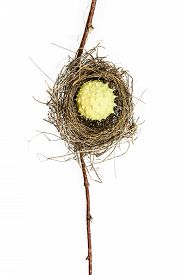 picture of nightingale  - Conceptual bird nest isolated on white background - JPG