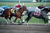 Race Horses Racing