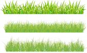 Set grass. One sample with large thick stems, and two variants with thin stems (grass field). Sample