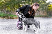 Woman Gives A Command To Her Dog (puppy) Siberian Husky In The Autumn Park. Dog Training And Obedien poster