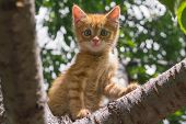 Ginger Kitten Sitting On A Tree Branch On A Sunny Summer Day. The Kitten Looks Into The Camera. In F poster