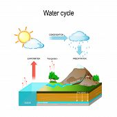 Water Cycle In Nature Environment. The Sun, Which Drives The Water Cycle, Heats Water In Oceans And  poster