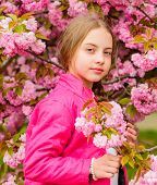 Kid Enjoying Pink Cherry Blossom. Tender Bloom. Pink Is The Most Girlish Color. Bright And Vibrant.  poster