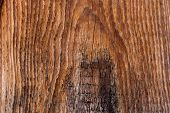 Moss And Mold Affect A Wooden Planks. poster