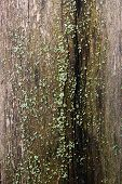 Bark With Moss And Fungus As Background Texture poster