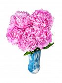 peonies in vase isolated on white