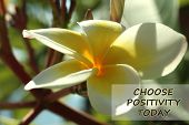 Positive Inspirational Quote- Choose Positivity Today. With Beautiful White Balinese Frangipani Flow poster