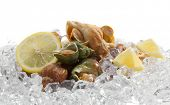 whelks with lemon on ice
