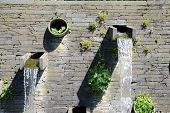 foto of waterspout  - waterspout outdoor with a lot of plants and moss - JPG