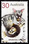 Postage stamp Australia 1974 Common Brushtail Possum