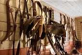 Saddlery wall filled with horse gear