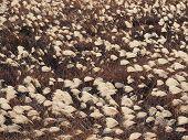 Saftigen Pampagras Feld
