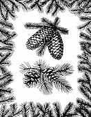 Barnches With Pine Cones And Fir Frame