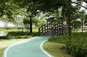 Garden and a wooden bridge