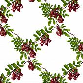 Ashberry Rhombic Branch Seamless Pattern with Berries and Leaves