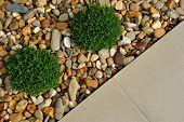 Landscape Outdoor Garden Design