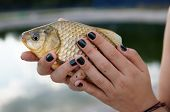 Crucian carp in woman's hands, close-up