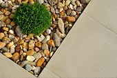 Plant, Pebbles And Paving Texture