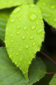 Leaf with rain drops
